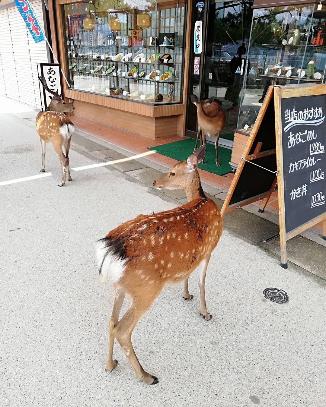 可愛い鹿さん
